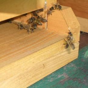 Unsere Cop-Gym Bienen