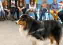 """Projekthund """"Mylo"""" besucht die Klassen 5"""