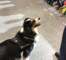 Besuch des Schulhundes Mylo