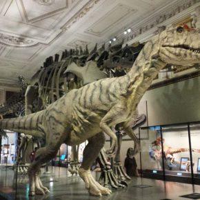 ...und Allosaurus im Naturkundemuseum Wien